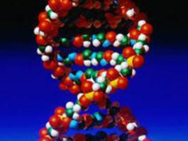 ADN, gènes, séquençage