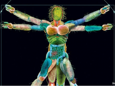 Les bactéries et l'homme : un rapport de force