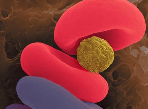 Concept de microparticules couplées à de l'oxygène.